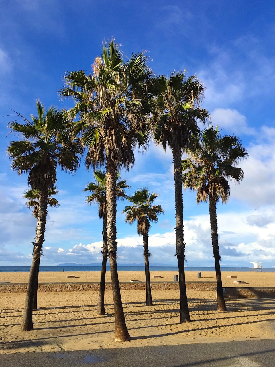 Palm trees at Huntington Beach, California