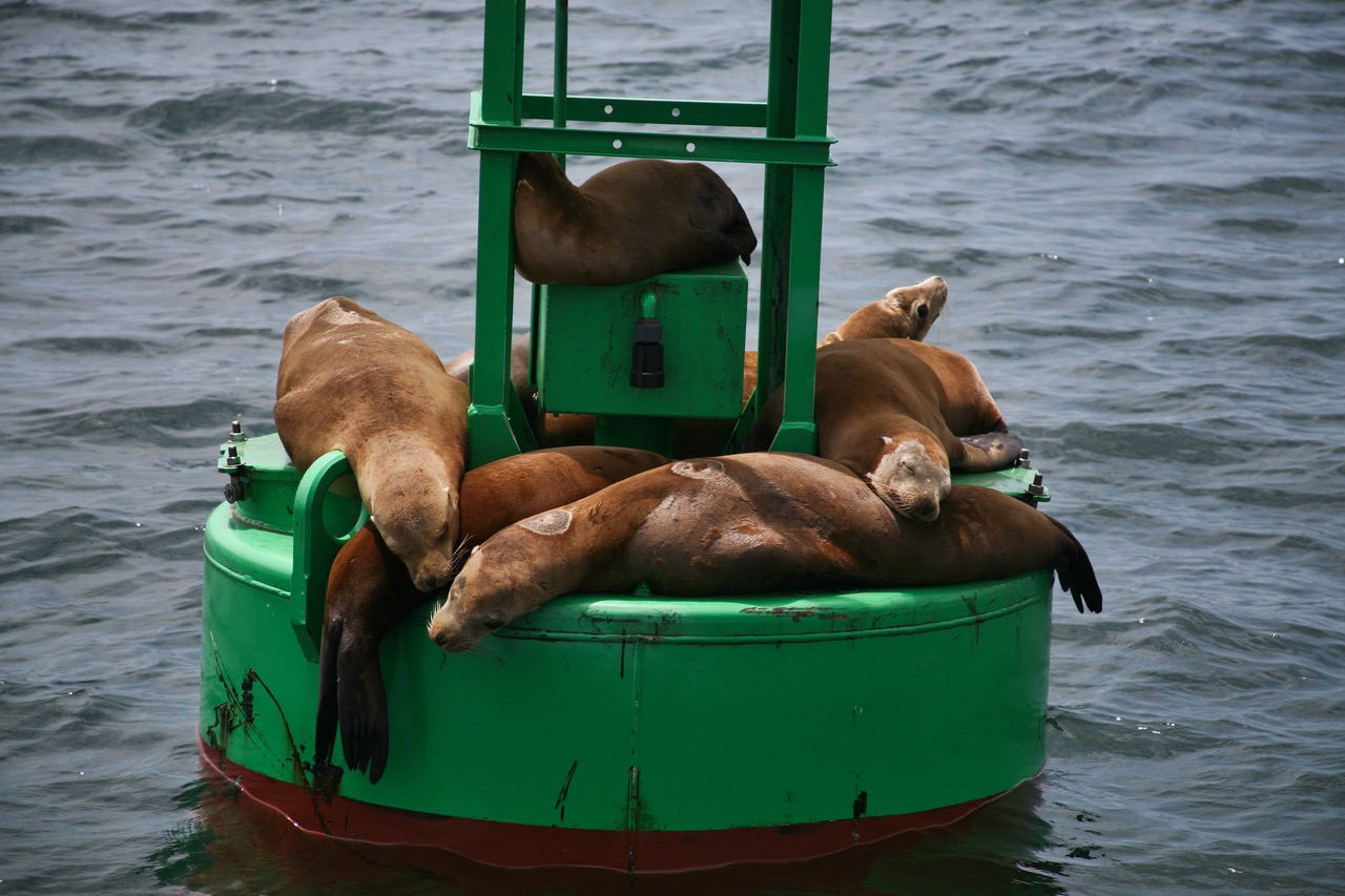Lazy sea lions in Santa Barbara