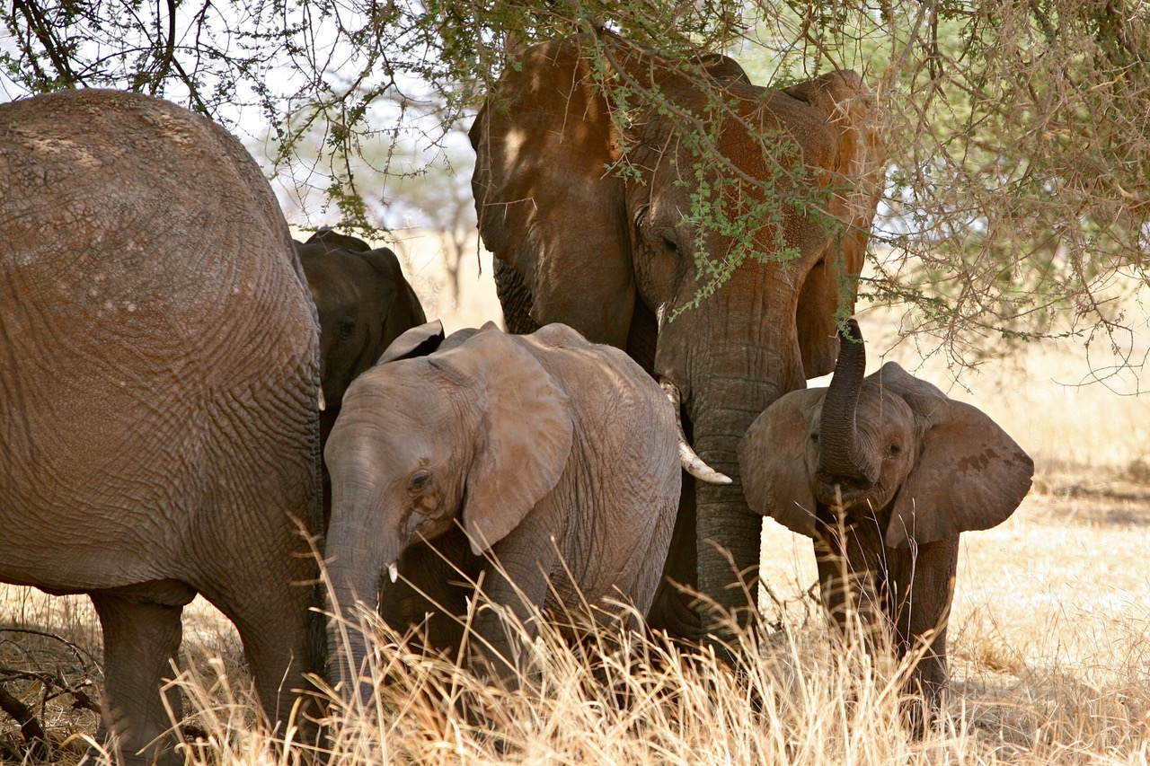Wonderful close up of elephant family at Tarangire National Park, Tanzania