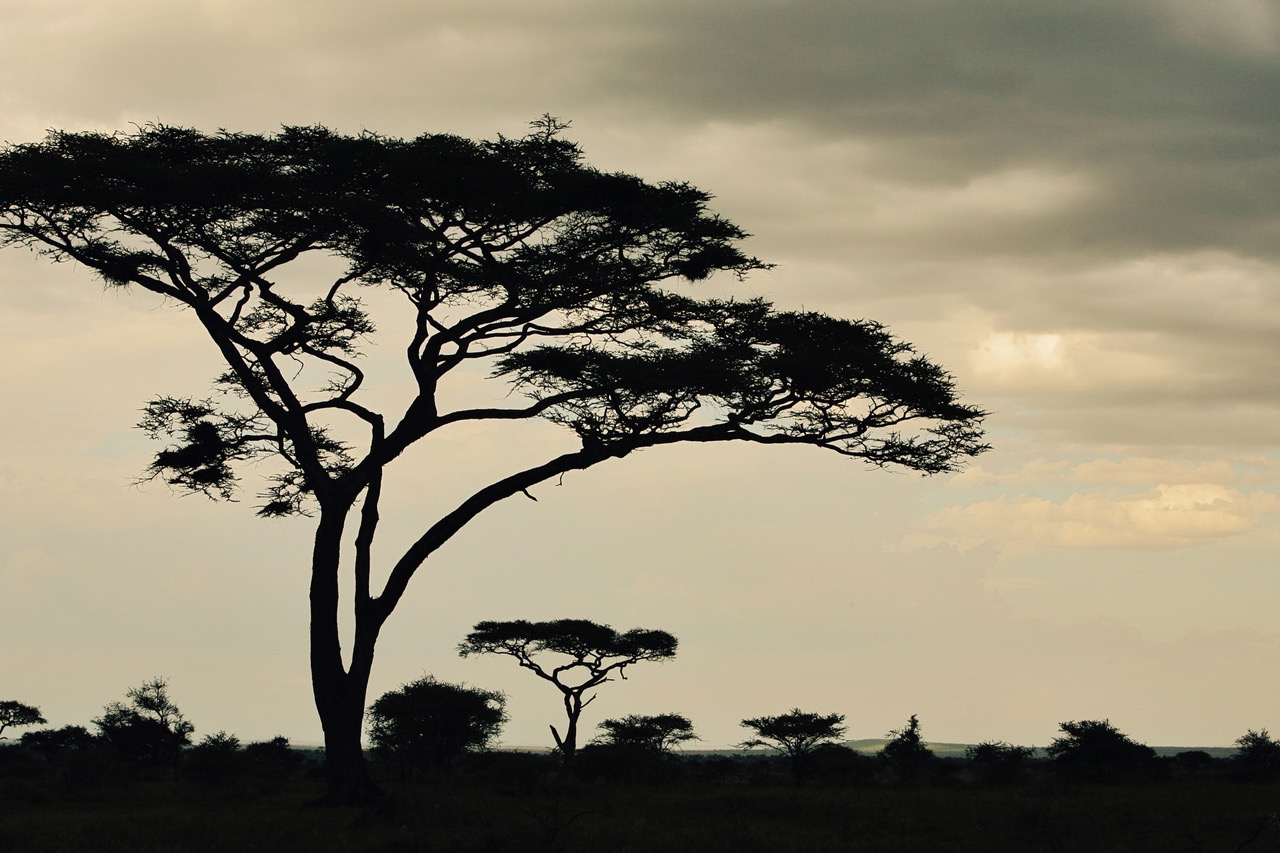 Early mornings at Serengeti National Park, Tanzania
