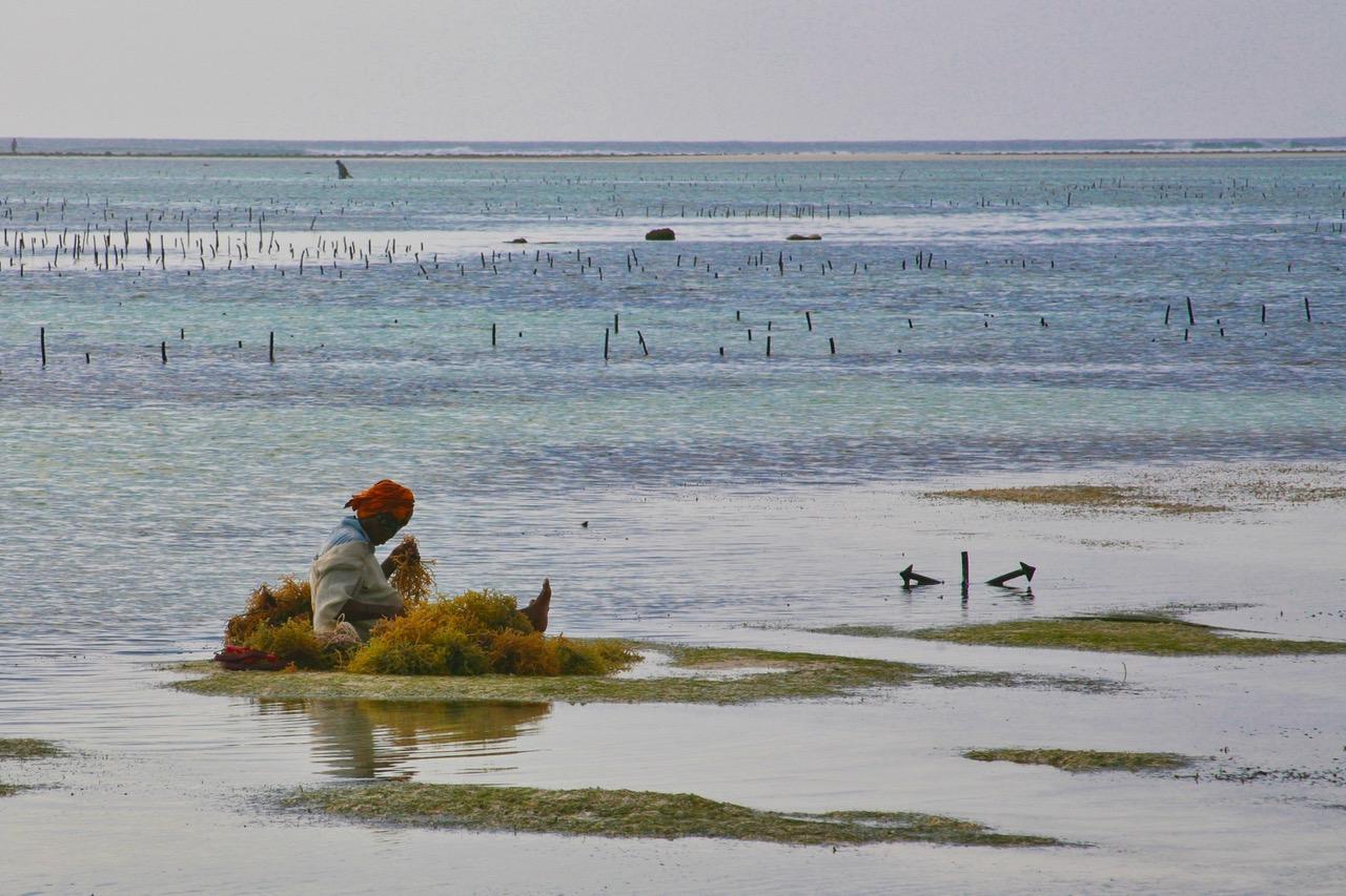 Woman at a seaweed farm at Matemwe Beach, Zanzibar