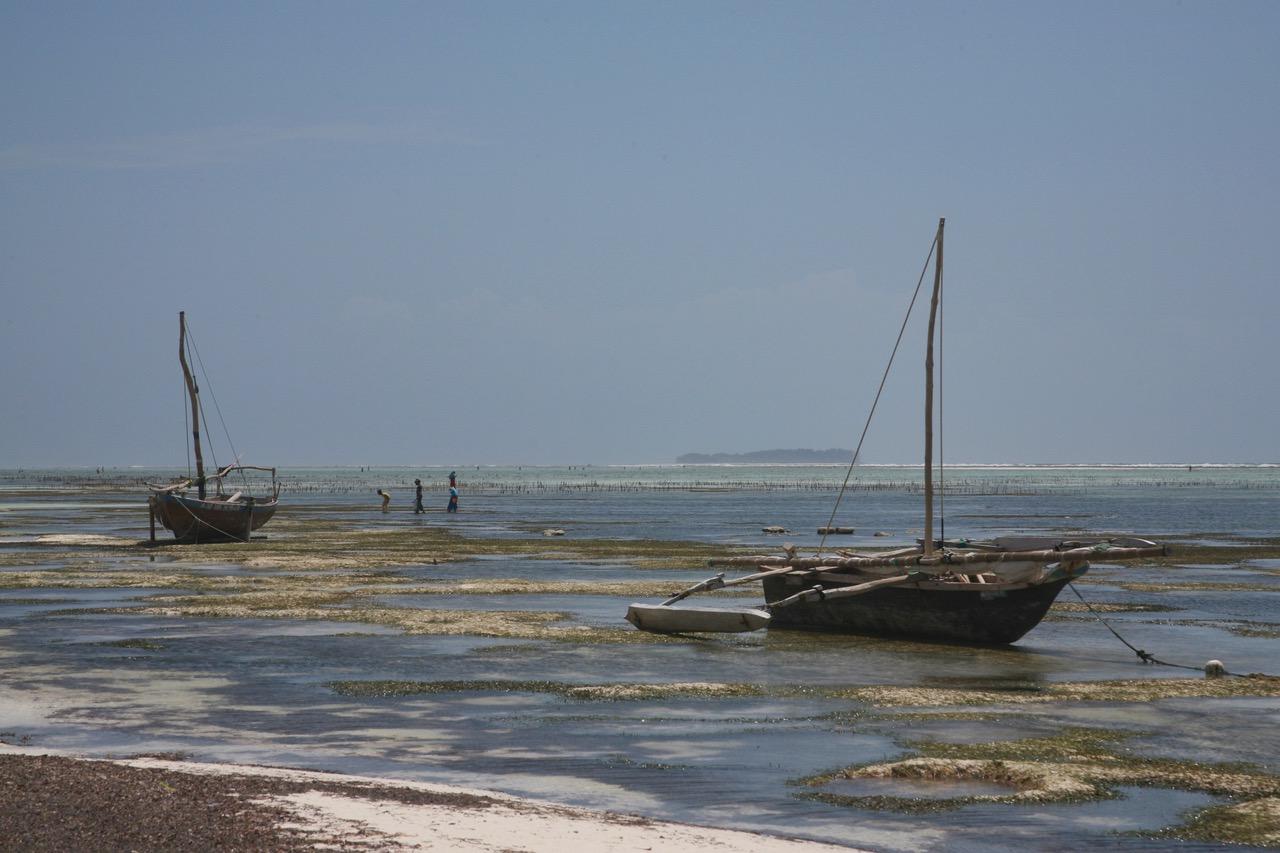 Low tide at Matemwe Beach, Zanzibar