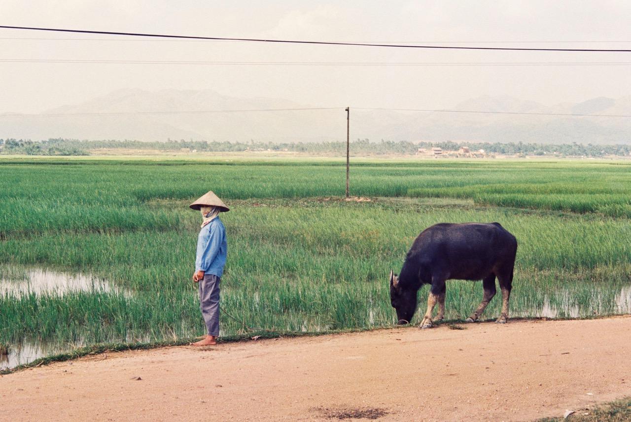 Vietnamese rice field near Hanoi