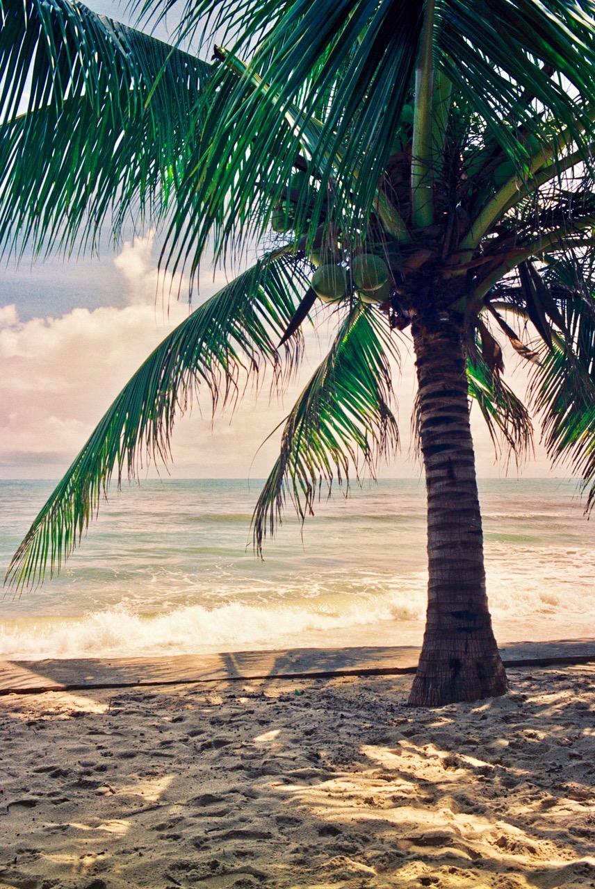 Koh Samui, Palm on Beach, Thailand Beaches