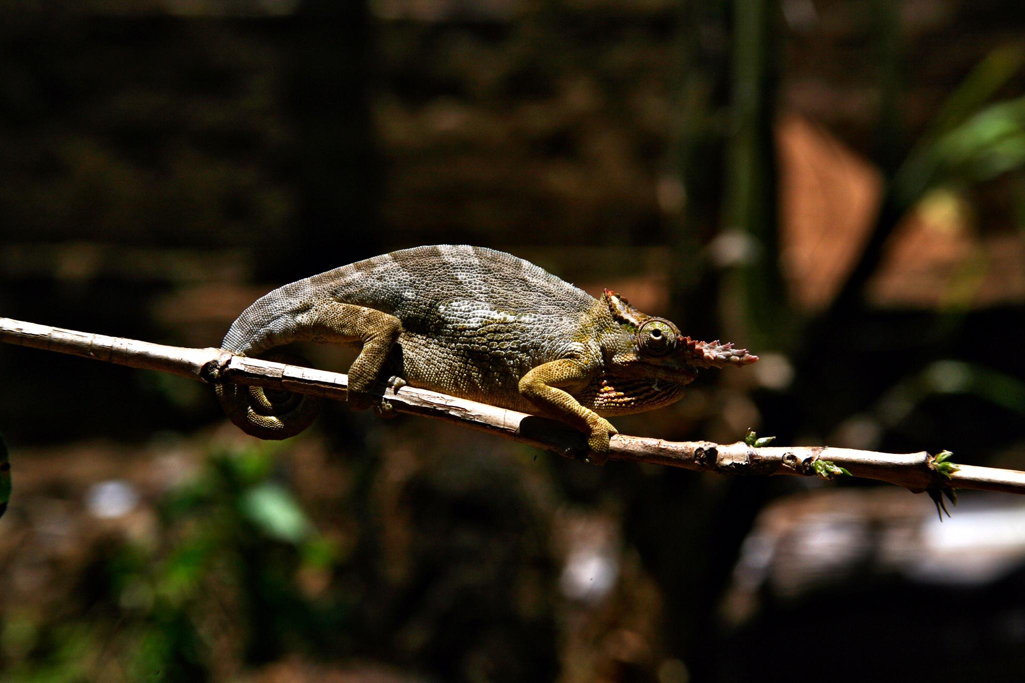 Reptile in Mount Kilimanjaro National Park