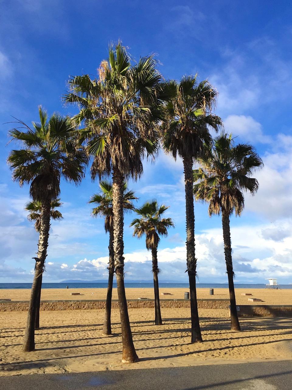 Palm trees at Huntington Beach, California