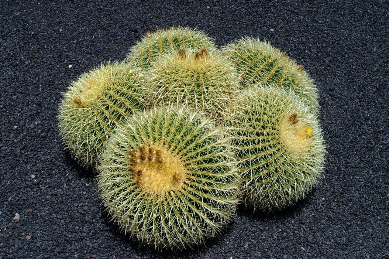 Jardin de Cactus, Lanzarote