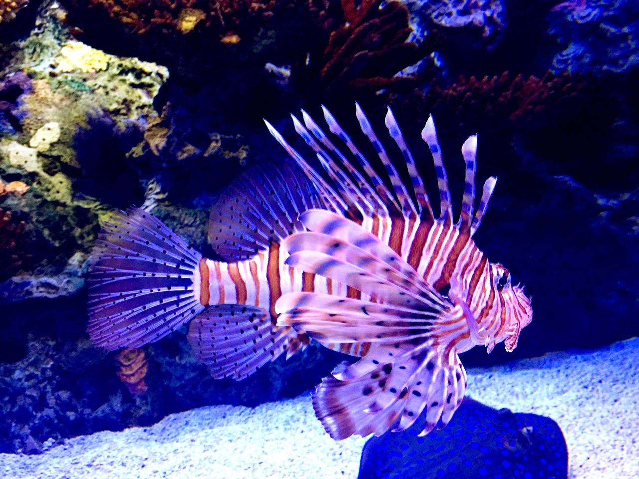 Colorful beautiful fish at Oceanário de Lisboa, Lisbon Oceanarium, Lisbon