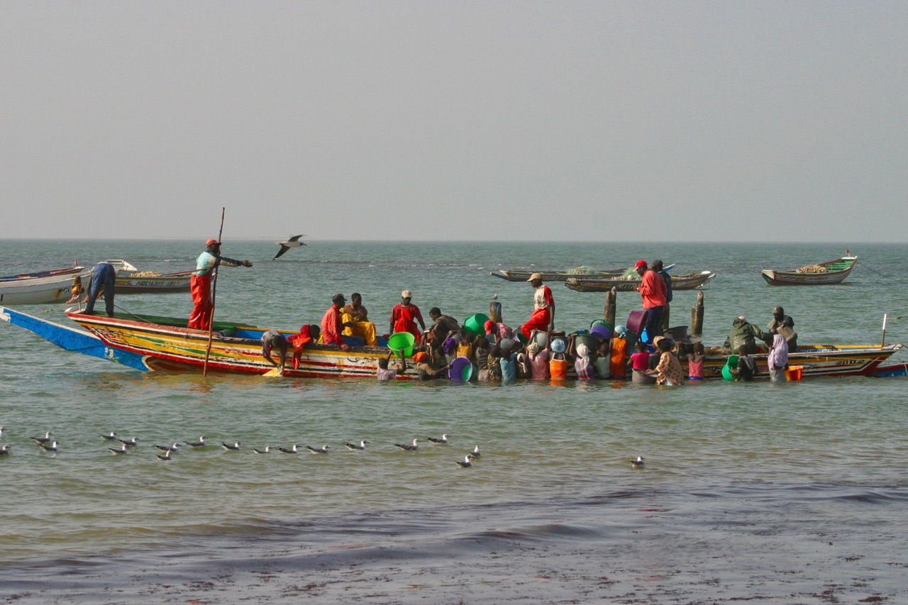 Fresh fish arrives in Tanji