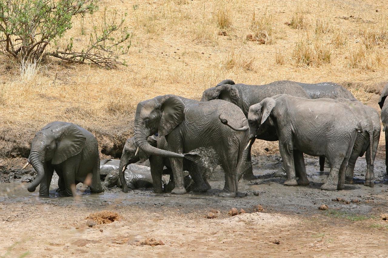 Elephant family taking a shower in Tarangire National Park, Tanzania