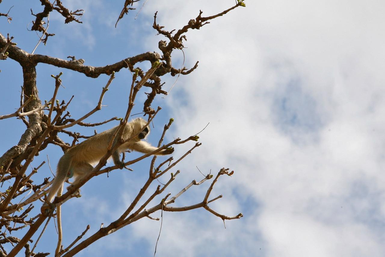 Monkey Lake Manyara National Park, Tanzania