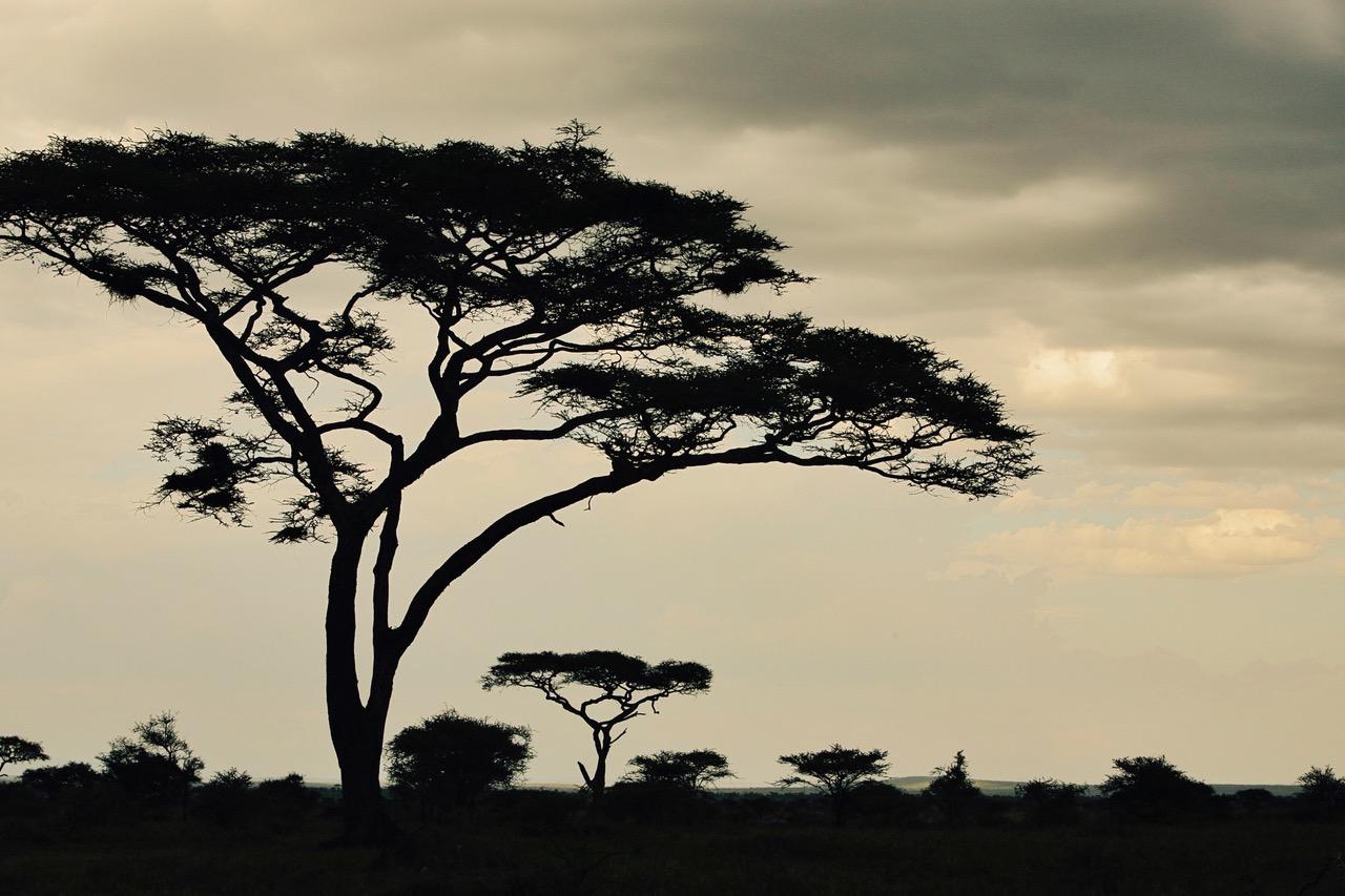 Early mornings at Serengeti National Park, Tanzania