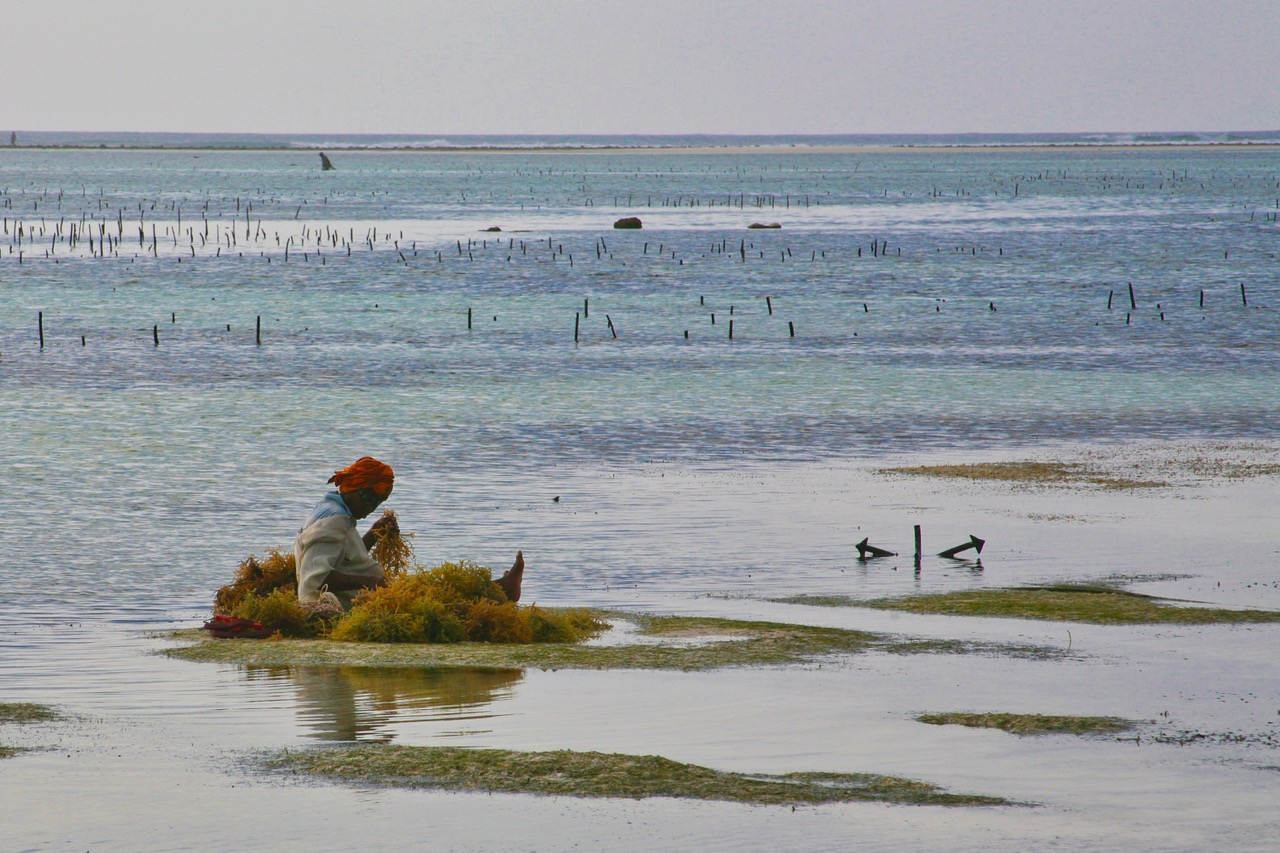 Woman at a seaweed farm at Matemwe Beach, Zanzibar