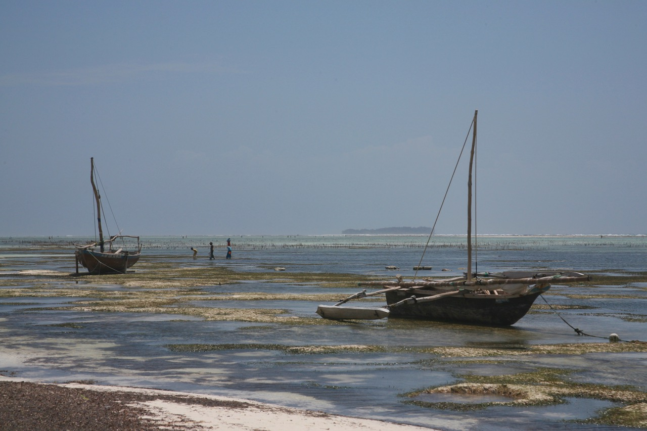 Low tide at Matemwe Beach, Zanzibar